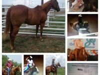 Duke is a 7 yr old registered sorrel horse with 3 white