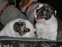 Both male and female available now please visit my