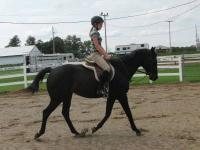 This is a 13 year old gelding that we have owned for