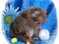 I have 3 male Pomeranian Puppies readily available. 2