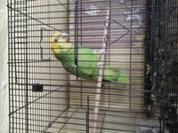 Exotic birds for sale...... Parakeets, finchs,