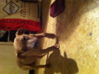 Taebo and Nala's 3rd litter is here! They are rare and