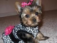 I am offering my male and female teacup yorkie puppies