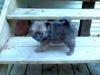 Dark Brown color Female White color Female Cream color