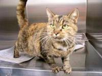 Extra - Toes Cat (Hemingway Polydactyl) - Margaret -