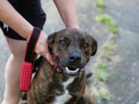Ezra is an adorable 1 year old male Plott Hound/Cur