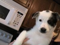 Ezzie is a 9 week old mixed breed! This puppy has been