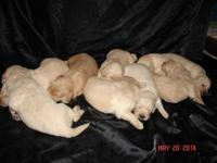 WE HAVE 3 LADIES AND 6 MALES IN THIS LITTER. THEY ARE