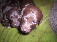 We are now taking reservations for our coming litter of