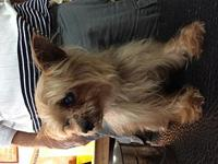 Fabio's story Fabio is a10-12 year old [approx.] Yorkie