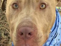 FACE (#12989) - Face (male) is between 3-4 yrs old,