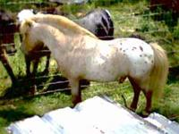 Many mini horses to choose from. Call us at  We are