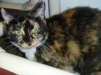 Petite 2-year-old calico female who was rescued as a