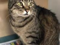 Faith's story Faith is the type of cat who will be your