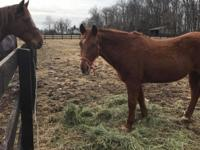 faith was rescued from a kill pen over the holidays.