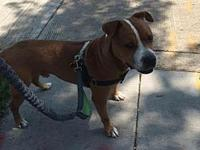 Falcon's story Falcon is a total sweetheart looking for