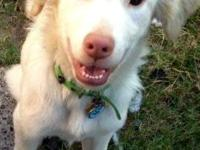 Falkor is a 2 1/2 year old border collie mix or maybe