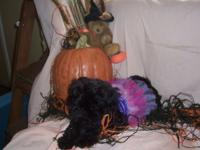 PRICE HAS BEEN REDUCED ON THESE TWO LITTLE PUMPKINS WHO