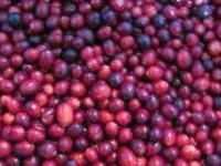 Fall Sale on Certified Organic Cranberries. Grown,