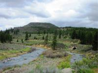RARE 80.00 HUGE ACRES WITH 25% STEAM AND MINERAL RIGHTS
