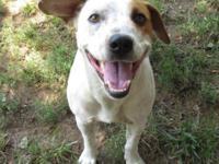 FAMILY DOG ALERT! Brand new to the shelter meet sweet