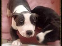 Youngster friendly beefy little new puppies have their