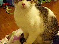 Fancy's story Fancy is a beautiful girl who is shy at