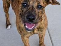 Fancy's story I'm a cute young brindle hound girl named