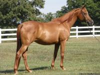 So Fyre Me is a registered Arabian mare by Nation