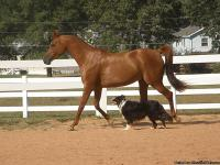 So Fyre Me is a registered Arabian mare by Nat.