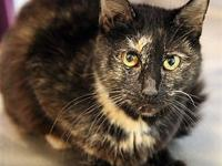 Fancy Rita's story Primary Color: Tortoiseshell Weight: