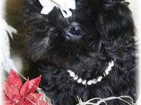 Fannie is a gorgeous Black little girl with a stunning
