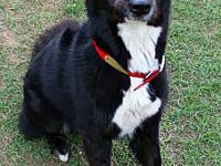 My story FarleyMaleBorder Collie mix55lbsApprox 2