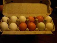 I have Fresh eggs for sale, they are brown and white in