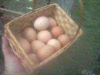 We have 15 laying hens! We have more eggs than we can