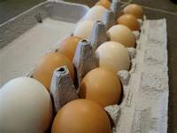 Farm fresh eggs for sale. $2.00 a dozen. email or call
