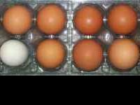 We have farm fresh eggs (usually less than 1 week old),