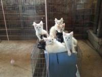 Farm Kittens in need of new homes. Asking $50 to offset