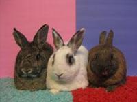Come Meet Our Pets... Come Visit Us at Bunny Bunch