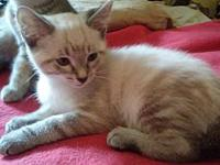 Farrah's story Farrah is looking for a new home! This