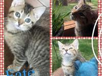 Fate's story All of our kittens are in various foster