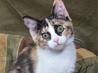 Fauna's story FAUNA Special Needs DSH Female/spayed