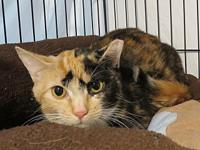 Fawn's story Fawn is a sweet-natured loving 1 year old