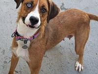 Fawn's story Breed: Lab Mix Age: 2 years old Gender: