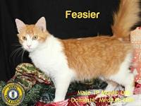 Feaster's story You can fill out an adoption