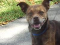 Feist - Brownie - Small - Senior - Female - Dog All dog