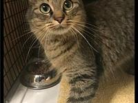 Feisty - 071 / 2018's story Please contact Maumelle