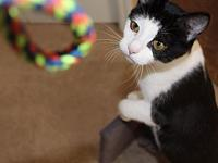 Feisty's story Hello there! My name is Feisty, and let