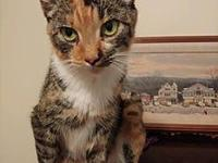 Felicity Female's story Felicity is a sweet mom cat,