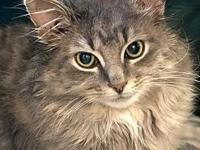 Feline Greystone's story Please contact Monica R Larner